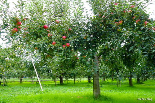Apple_farm_02