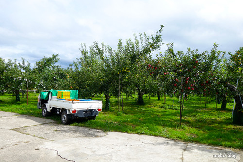 Apple_farm_03