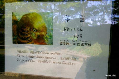 Hachiman_park_07
